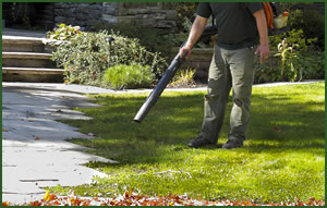 fall-clean-up-services-addison-illinois